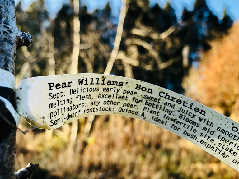 The label on a recently planted pear tree.